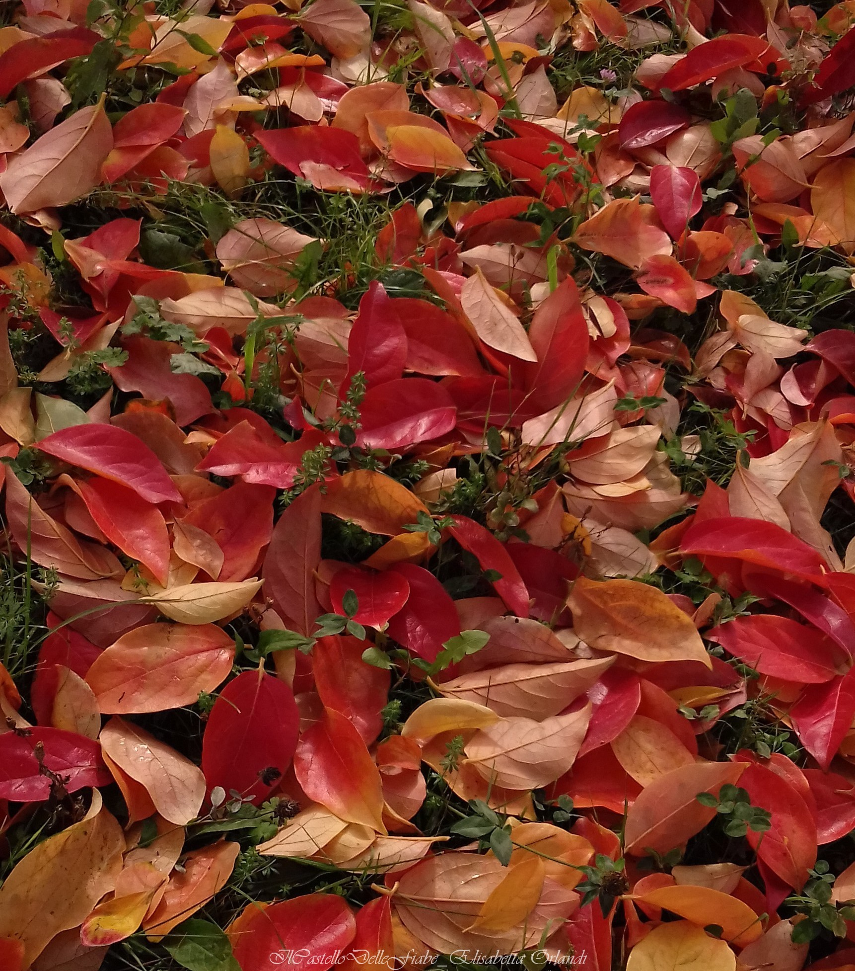 Red leaves_1